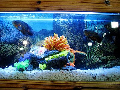 Large Aquarium Aquascape