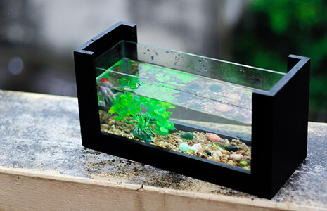 Small Freshwater Fish Tank