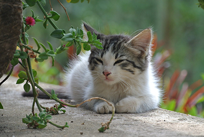 cat-photo.jpg