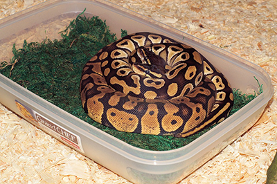 pet-snake-in-container.jpg