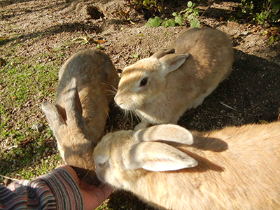 rabbit-feeding.jpg