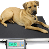Vets: Why Accurate Animal Weighing is Important
